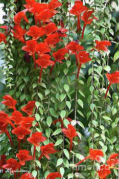 Flower Curtain by Mariarosa Rockefeller