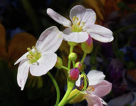Flower dance  by Yuri Hope
