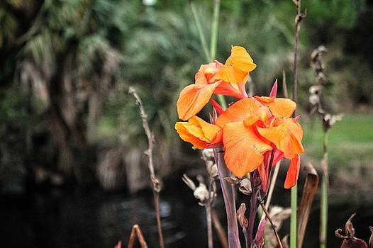 Flower in the Outdoors by Scott Gunnerson