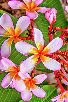 Flower Patterns Collection Set 06 by Az Jackson
