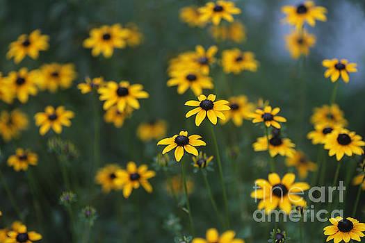 Flower Summer Evening by Rachel Morrison