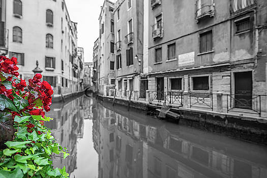 Flowers and channels by Sergey Simanovsky
