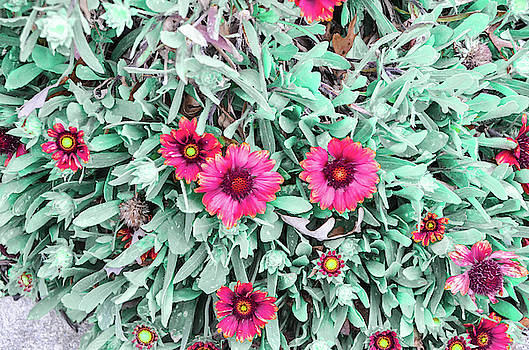 Flowers by CK Brown