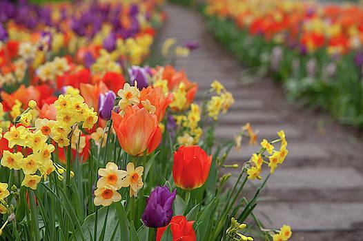 Jenny Rainbow - Flowers Greetings 1