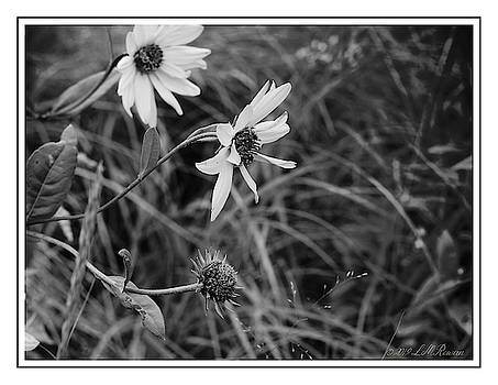 Wild Field Flowers in Monochrome by Images Undefined