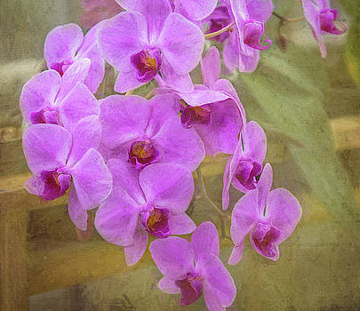 Flowing Orchids by Debra Martz