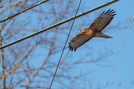 Fly By Wire by Brian Hale