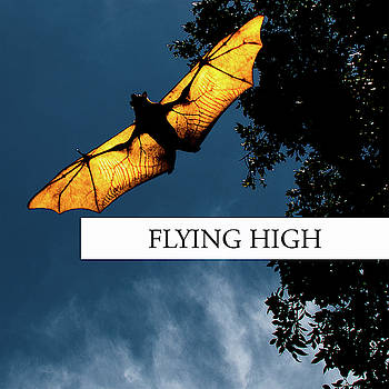 Flying High by Rob D Imagery