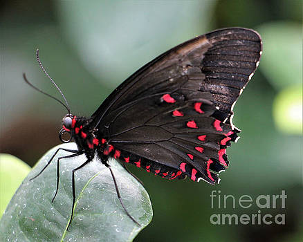 Flying Polka Dots by Kathy M Krause