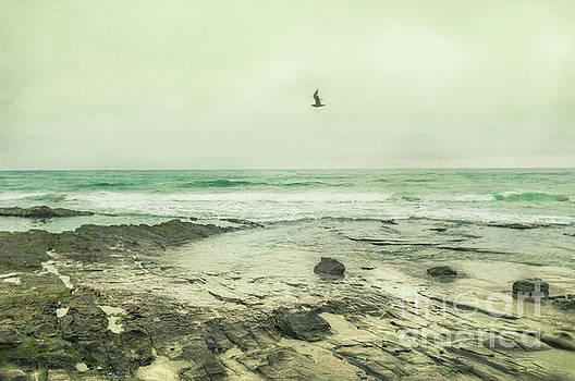 Flying Solo by Illumina Photographics