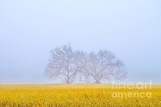Foggy Friends by Gary Richards