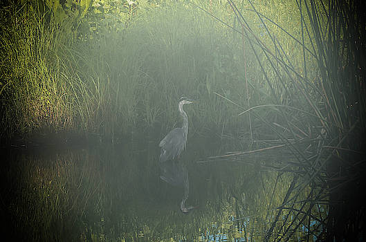 Foggy Morning by CK Brown