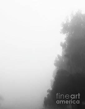 Foggy Morning by Fei A
