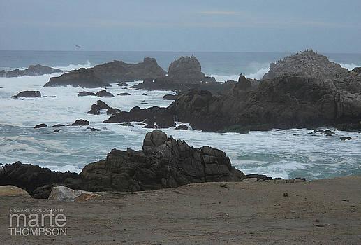 Foggy Pacific Grove by Marte Thompson