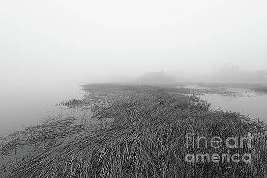 Dale Powell - Foggy Serenity - Salt Marsh