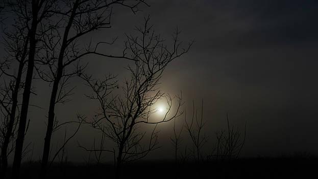 Foggy Sunrise 2 Ocala National Forest Florida by Lawrence S Richardson Jr