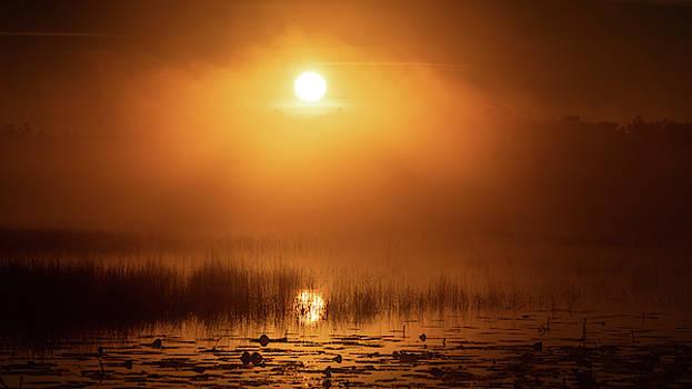 Foggy Sunrise Ocala National Forest Florida by Lawrence S Richardson Jr