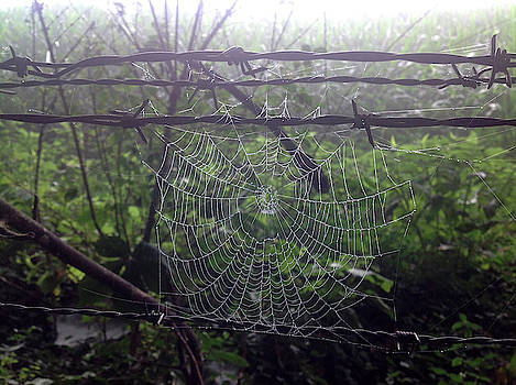 Foggy Web by Ericamaxine Price