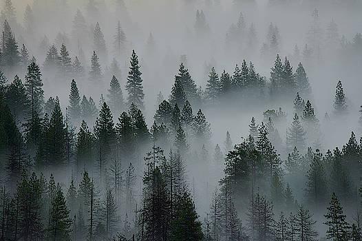 Jon Glaser - Foggy Yosemite
