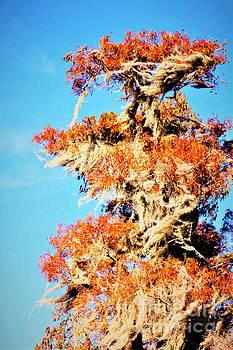 Diann Fisher - Foliage Vibrance