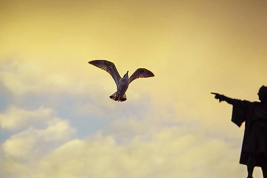 Jonny Jelinek - Follow This Bird -- Columbus Discovering America