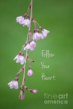 Follow Your Heart by Kristi Cromwell
