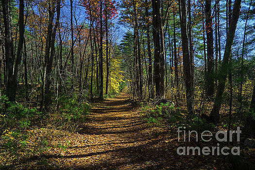 Follow Your Own Path by Linda Howes