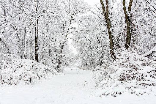 Footsteps in the Snow by Terri Morris