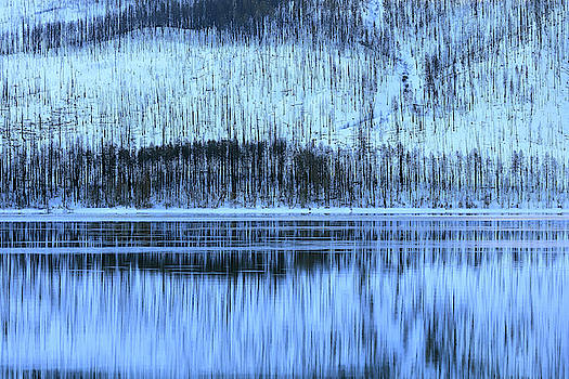 Forest and Lake McDonald, Flathead County, Montana by Troy Montemayor