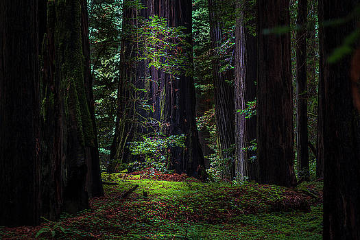 Forest for the  Trees by Peter Tellone