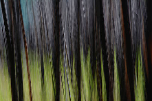 Forest Illusions- Reynolds Burn by Whispering Peaks Photography