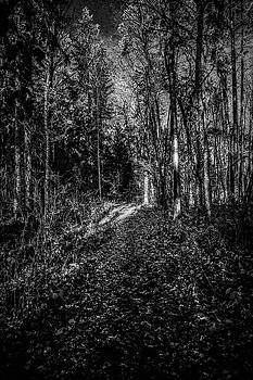 Forest light BW #i1 by Leif Sohlman