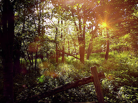 Forest Light by Kathy Gail