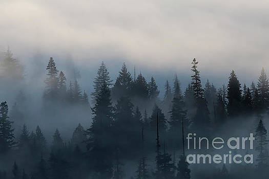 Forest Morning Mist by Mike Dawson