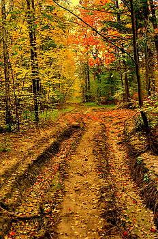 Henryk Gorecki - Forest road