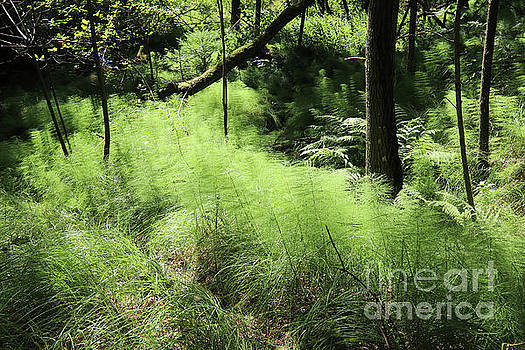 Forest still life with a horsetail by Michal Boubin