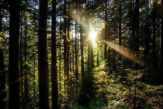 Pelo Blanco Photo - Forest Sunburst