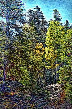 Forest Sunlight by Joel Bruce Wallach