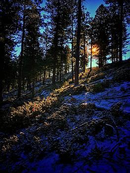 Forest Sunrise by Dan Miller