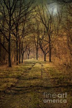 Larry Braun - Forest Trail