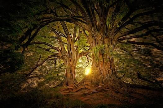 ForestDawn by Harry Warrick
