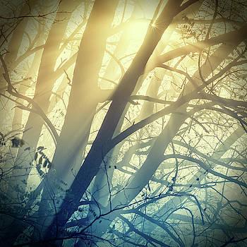 Forest's painting by Marek Ondracek