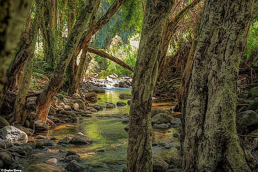 Forever Flowing Rainwater by Gaylon Yancy
