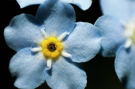 Forget Me Not by Nathan Carlsen