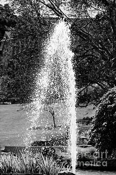 Diann Fisher - Fountain Spray In Black And White