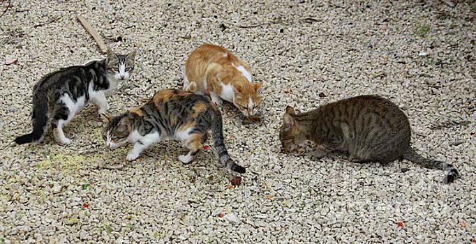 Four Foraging Felines by PJ Boylan