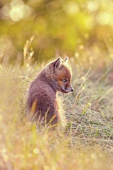 Fox Kit Series - Cuteness in Foxcoat by Roeselien Raimond