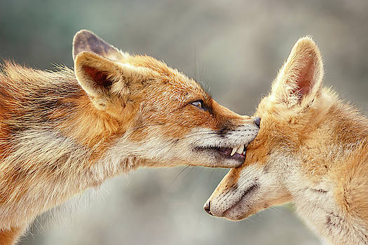 Fox Love Series - That's My EYE by Roeselien Raimond