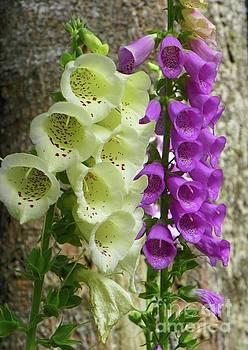 Foxglove Flowers by Art Sandi