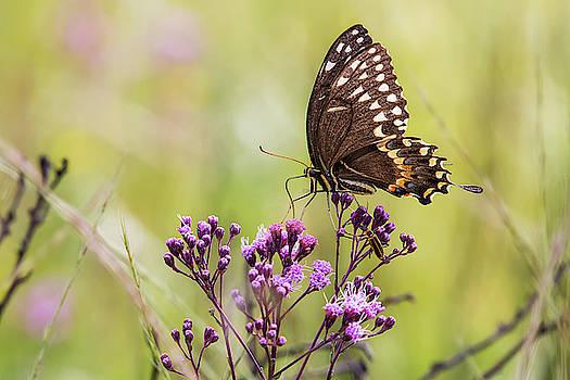 Fragile Wings by Bob Decker